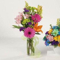 Gerbera Greeting   148   $29.95