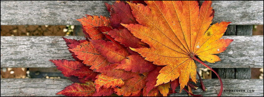 Fall-Autumn-Red-and-Orange-Leaves-5613