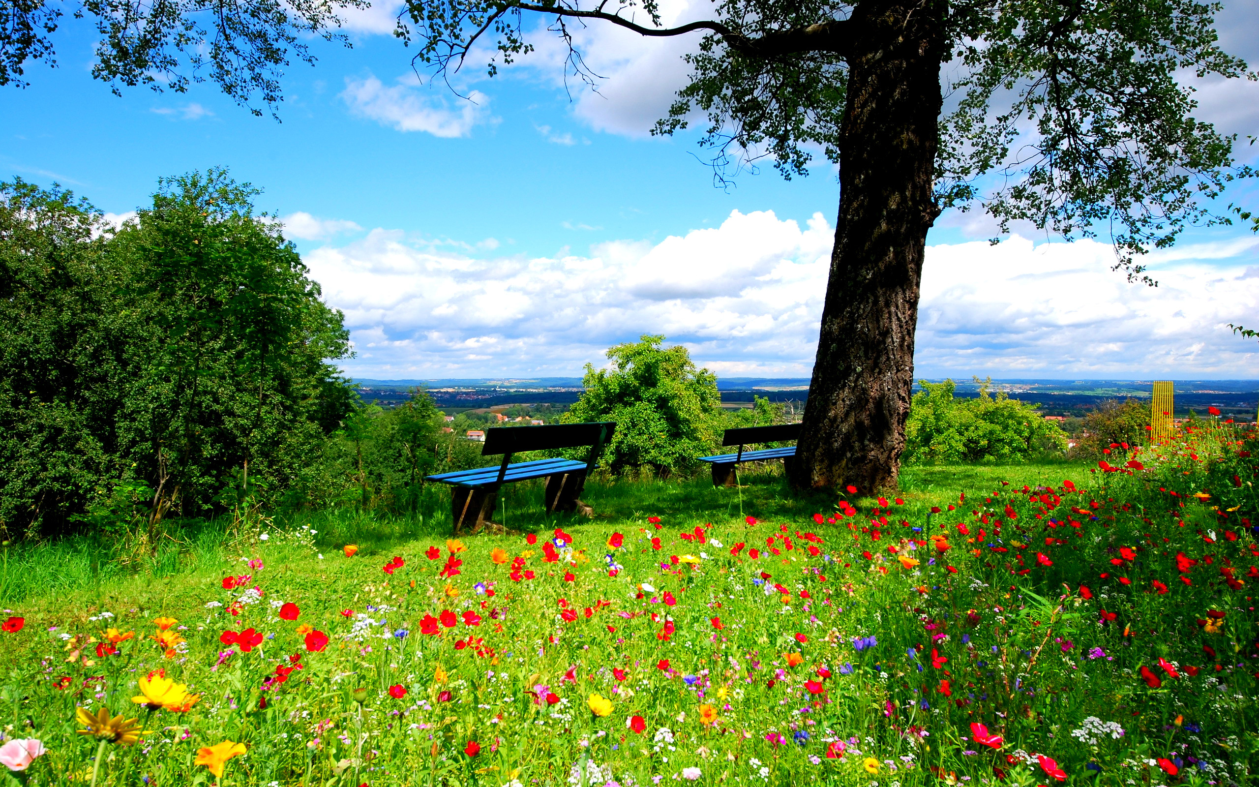 4363_A-field-of-colorful-flowers-beautiful-nature-landscape