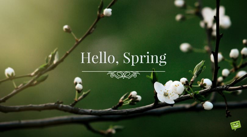 Hello-Spring-quote-on-picture-with-white-flowers