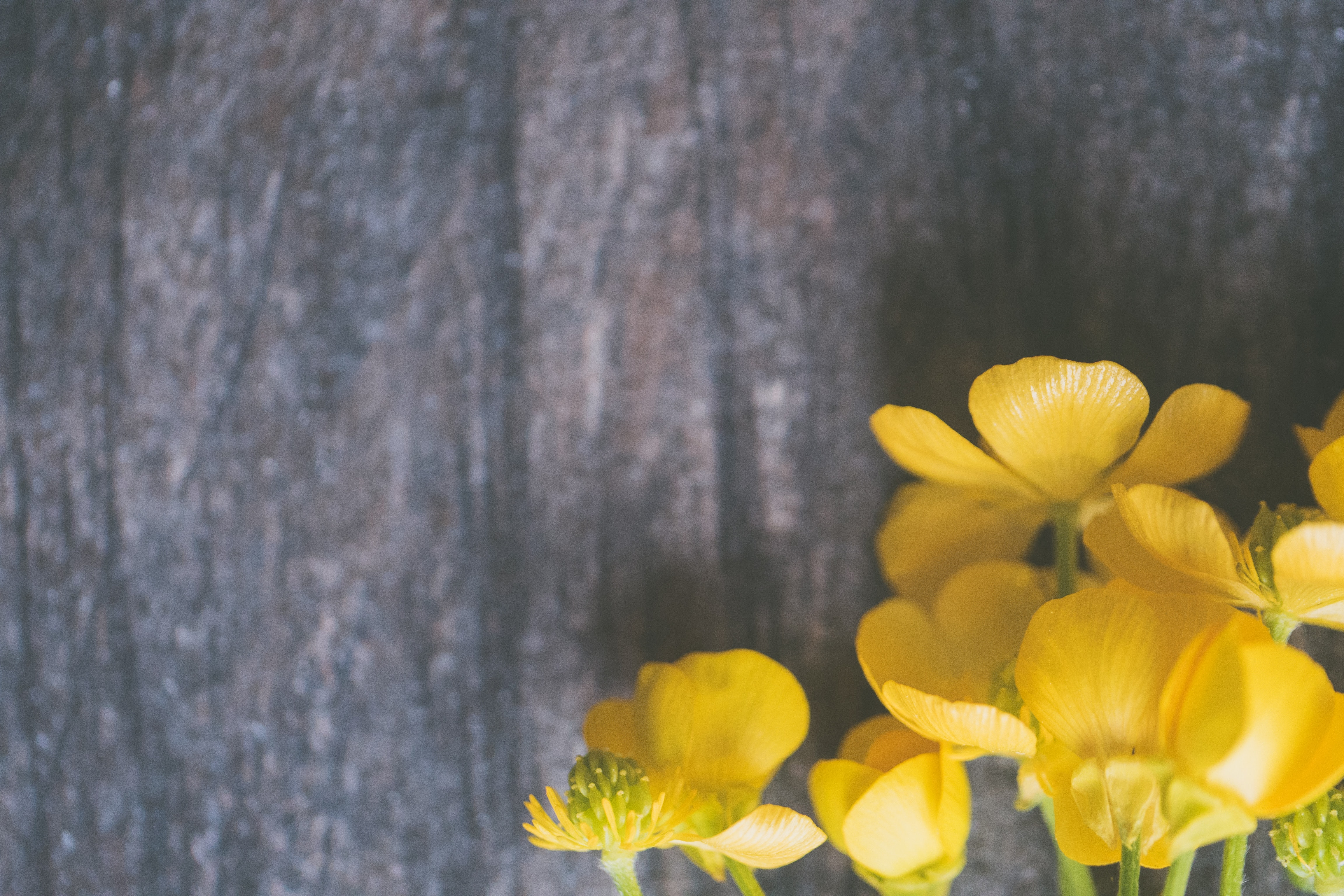 background-beautiful-bloom-1039106