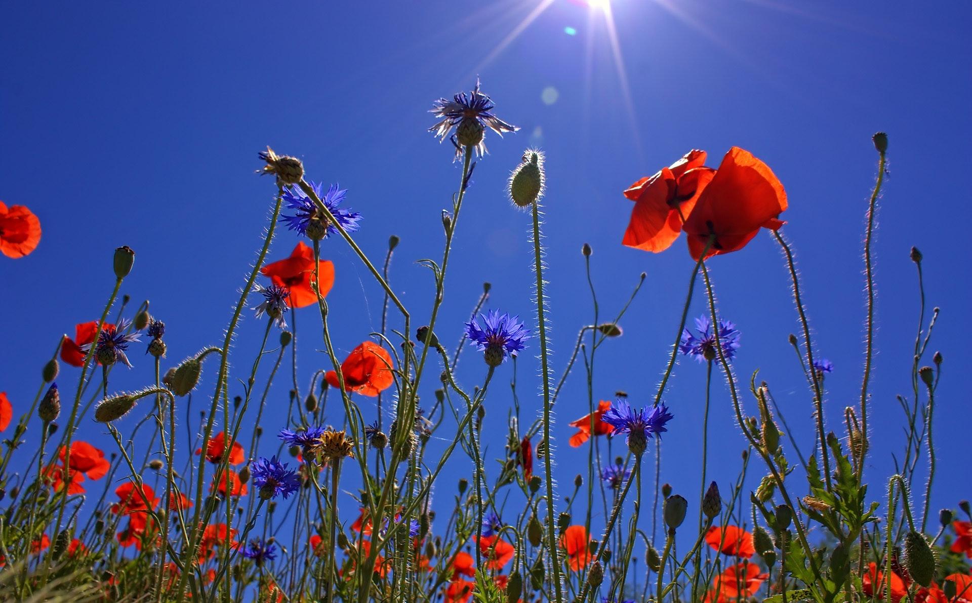bloom-blossom-flora-35640