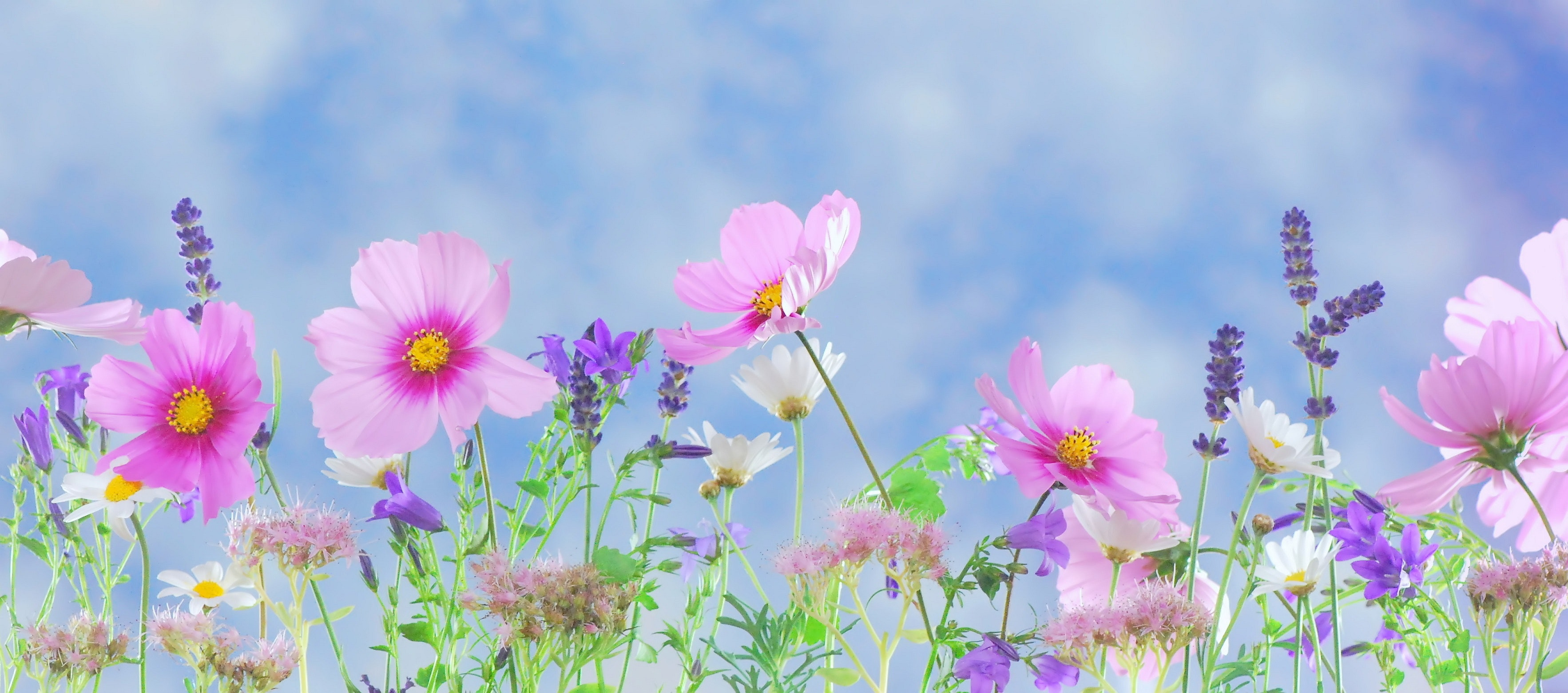 bloom-blossom-flora-40797